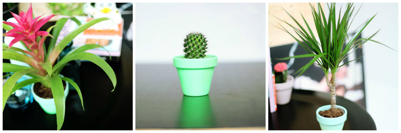 Bromelia, cactus en Dracaena