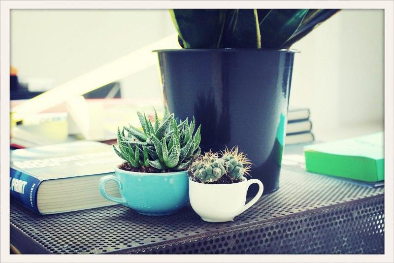 vetplanten