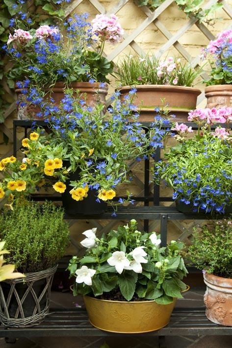 Wat kan je planten in mei floor for Wat lemmet terras betekent
