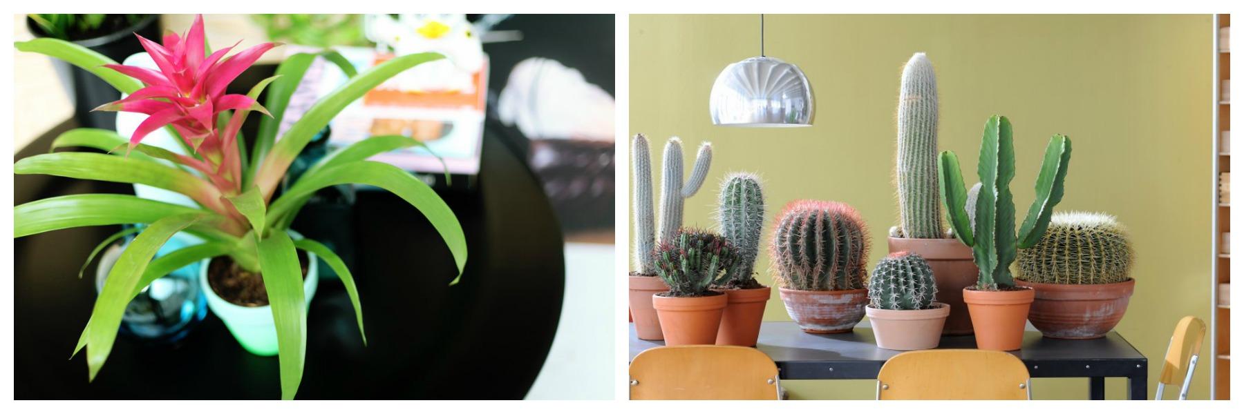 Bromelia en cactussen ©mooiwatplantendoen.nl