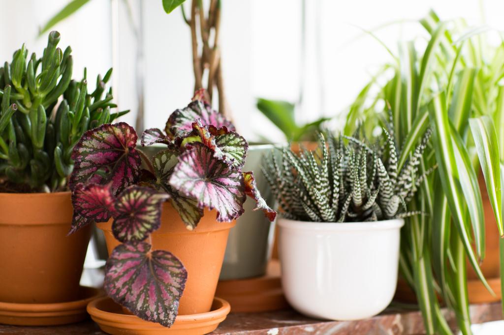 Vetplantjes, bladbegonia en graslelie