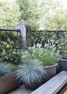 balkontuin terrastuin appartement DSC_2609_Little Bunny