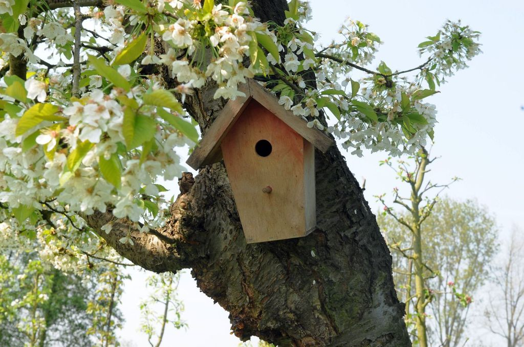 Annie 0102 vogelnest in appelboom - Beestige Bucket