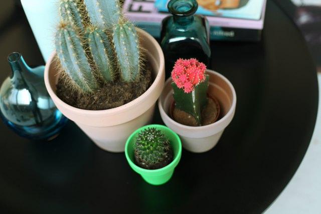 Zo verzorg je een cactus