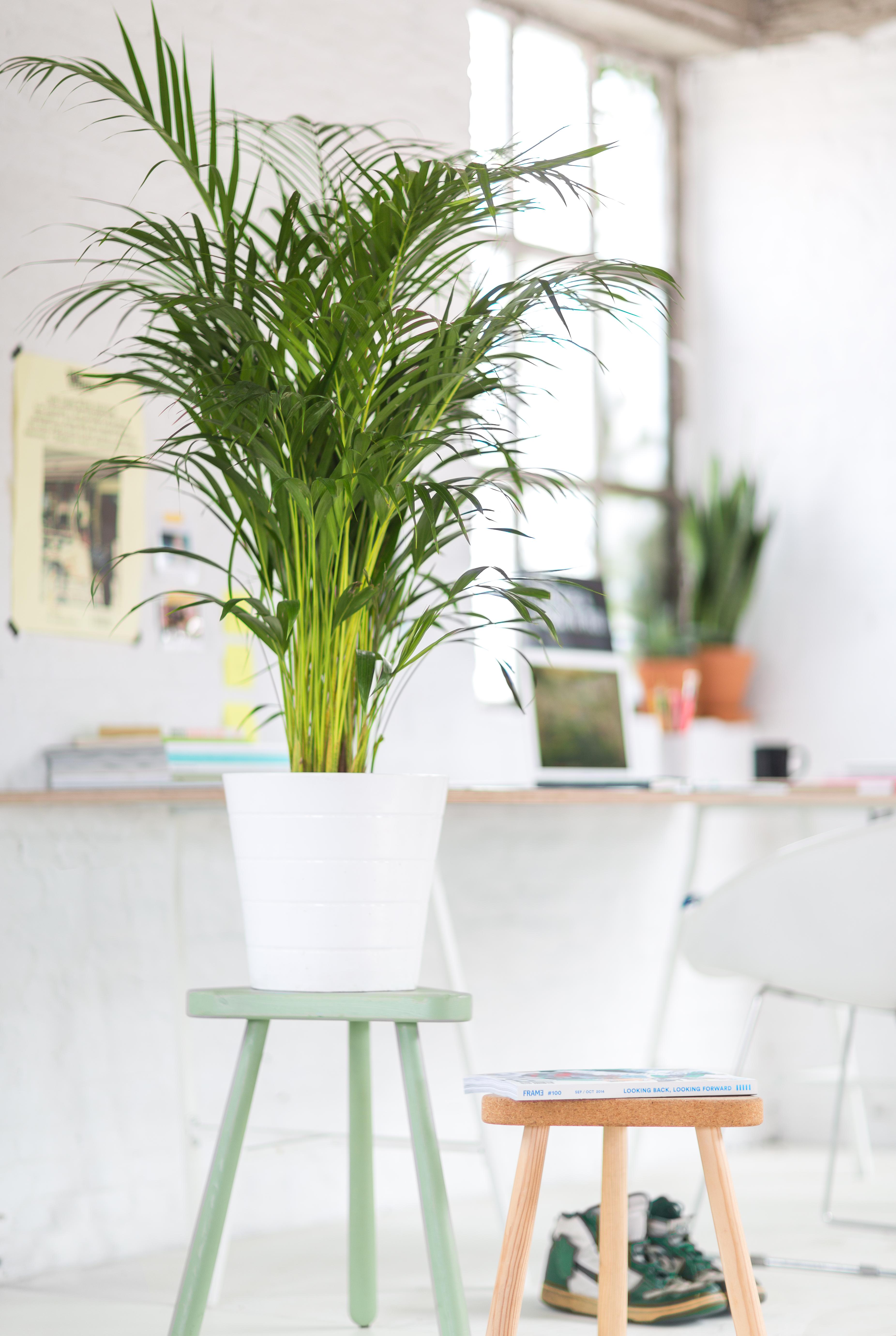 6 tips om je huis om te toveren tot een jungle floor - Een stuk grond ontwikkelen ...