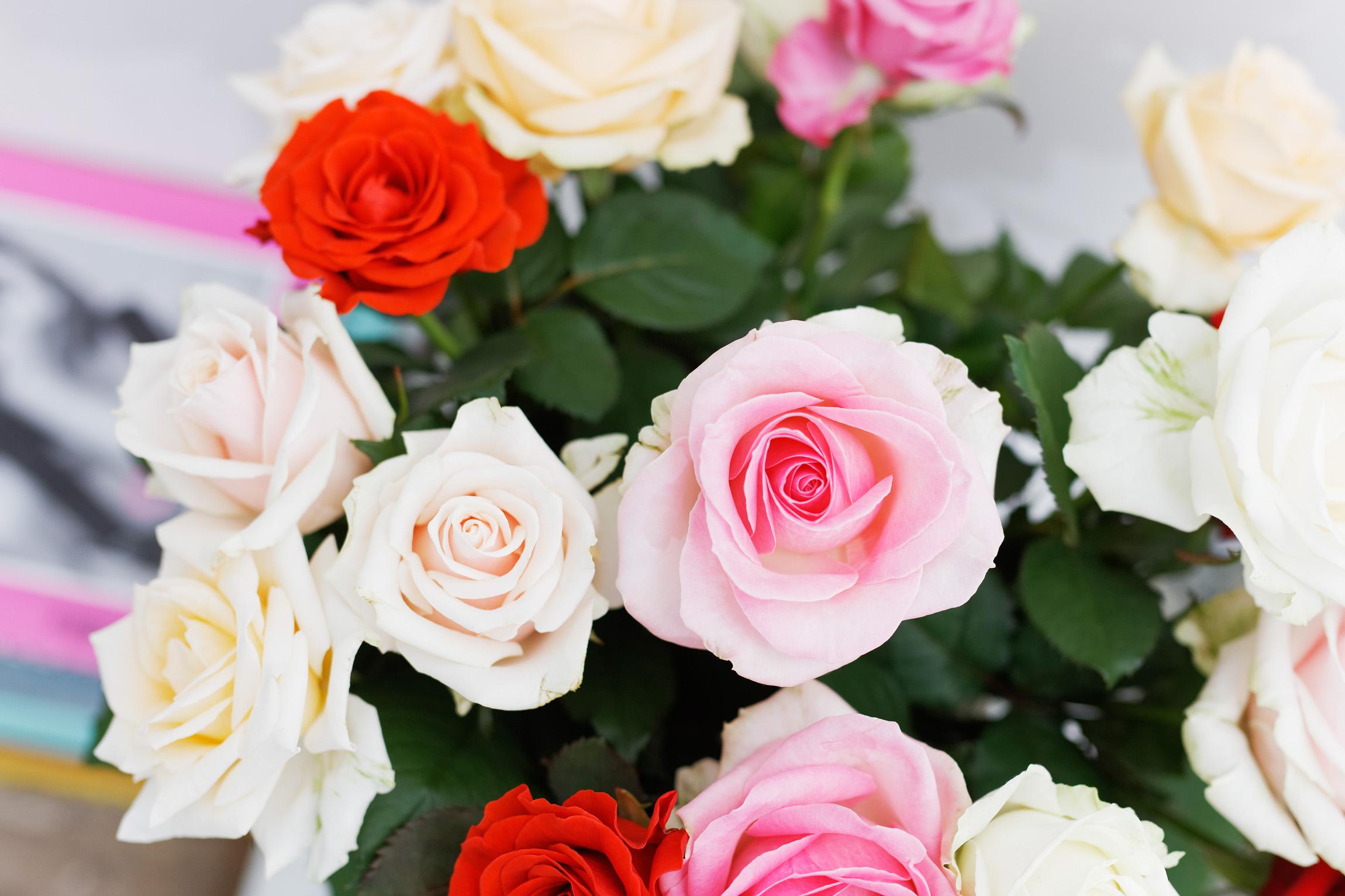 De roos is en blijft de koningin onder de bloemen. Op bezoek bij rozenkwekerij Wimceco