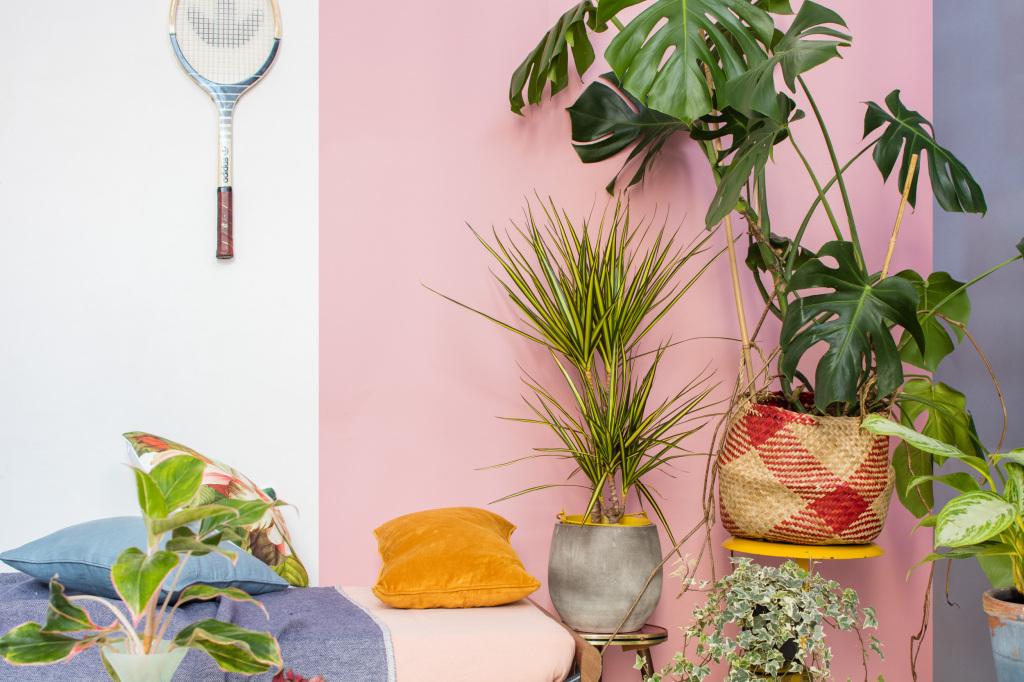 Exotisch En Eclectisch Met Planten Breng Je De Zon N