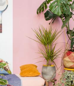 Exotisch en eclectisch. Met planten breng je de zon én meer kleur in huis.