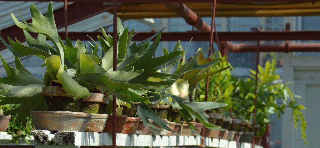 DSC_0264 kamerplanten naar buiten