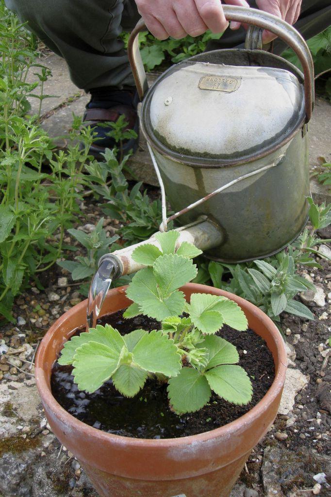 Terras verplanten water geven enz