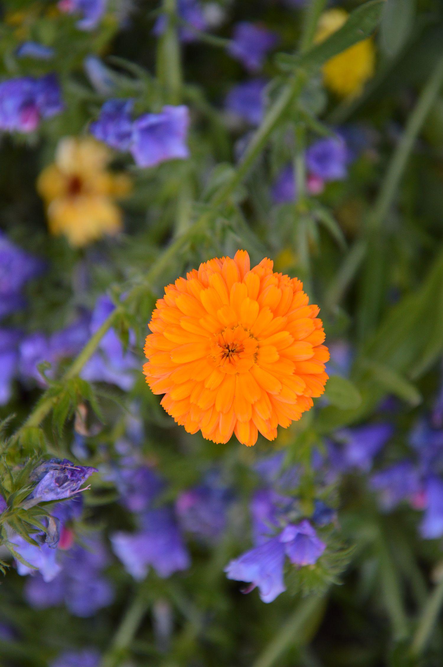 Wat kan je doen in mei: zet de bloempjes buiten