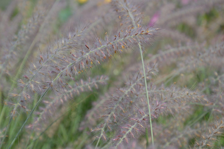 DSC_0226 aaibaar grasaartjes