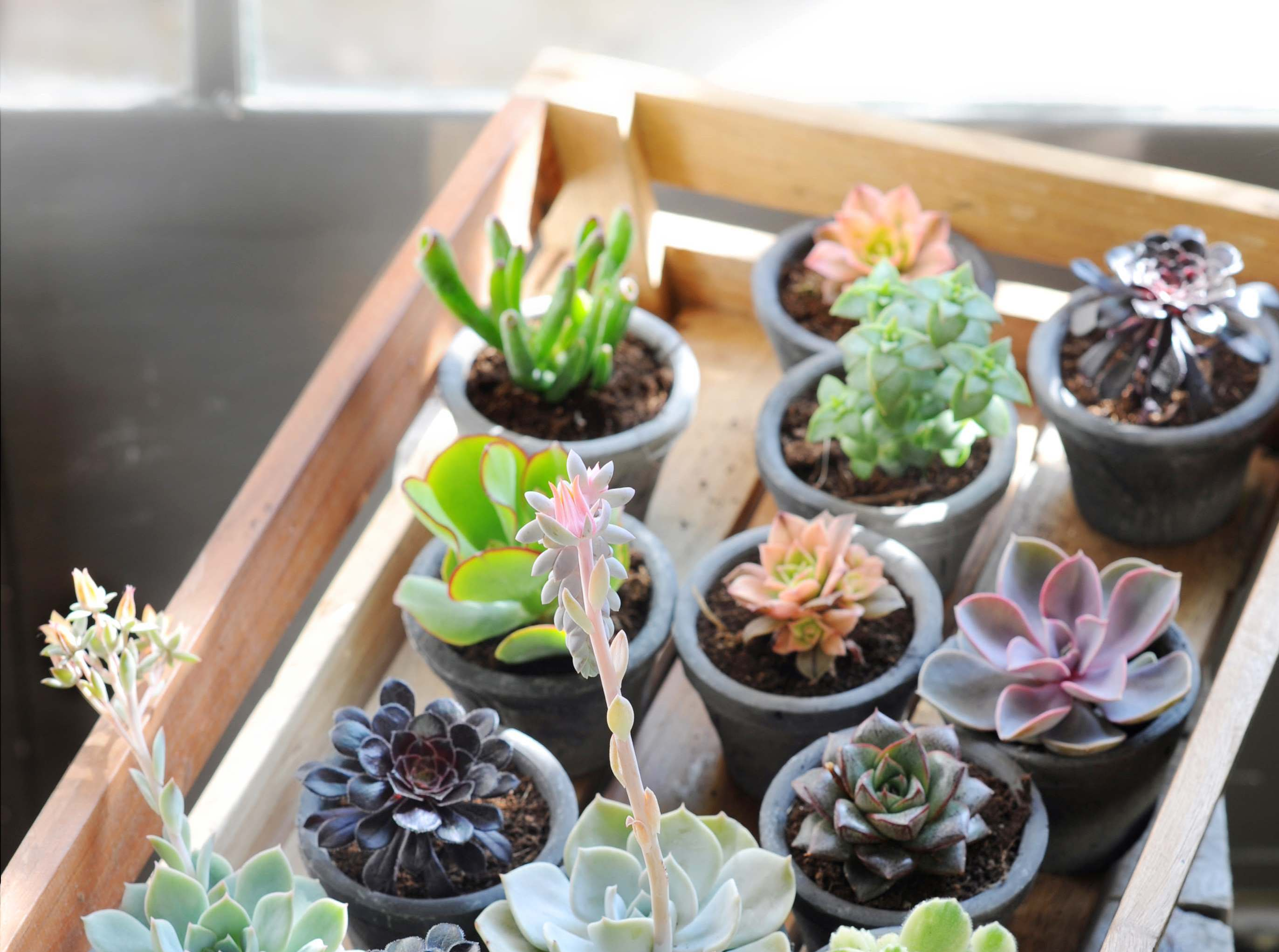 Een zonnig terras? Deze planten zijn ideaal!