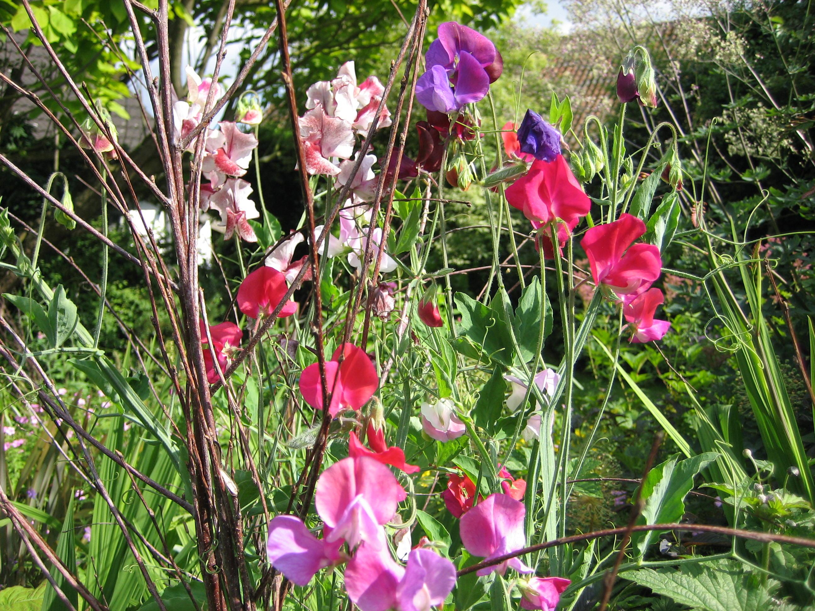 7 heerlijk geurende planten voor je terras