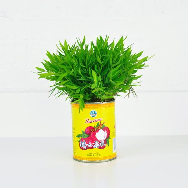 plant1_square_600x600