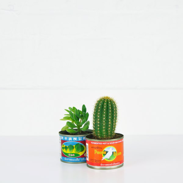 plant2_square_600x600