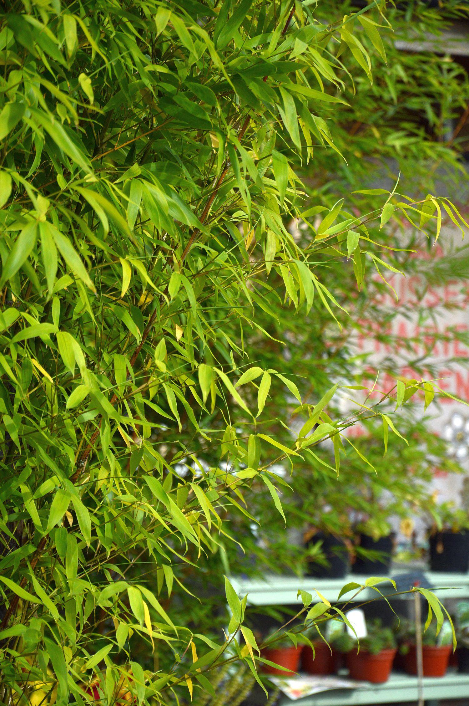dsc_0421-bamboe
