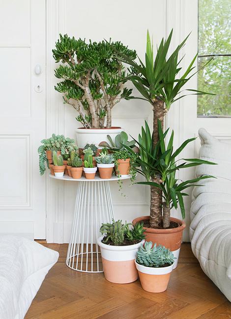 Winterproof je planten