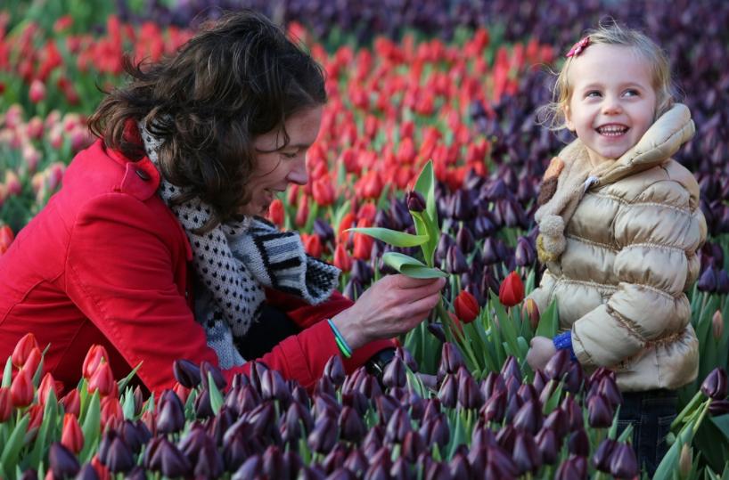 Bezoek de eerste Pluktuin met Vlaamse tulpen
