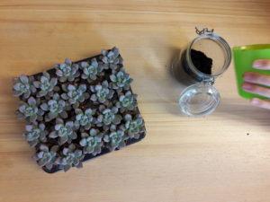 Vul jouw terrarium met potgrond