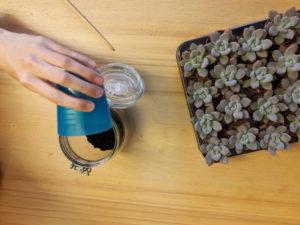 Vul je terrarium met hydrokorrels
