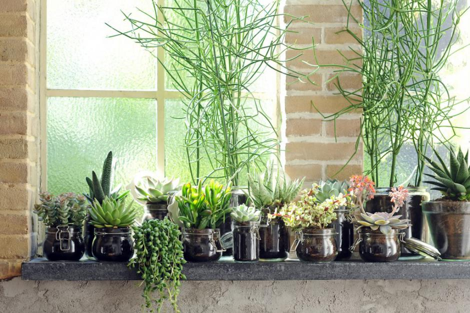 Zo overleven je kamerplanten de winter
