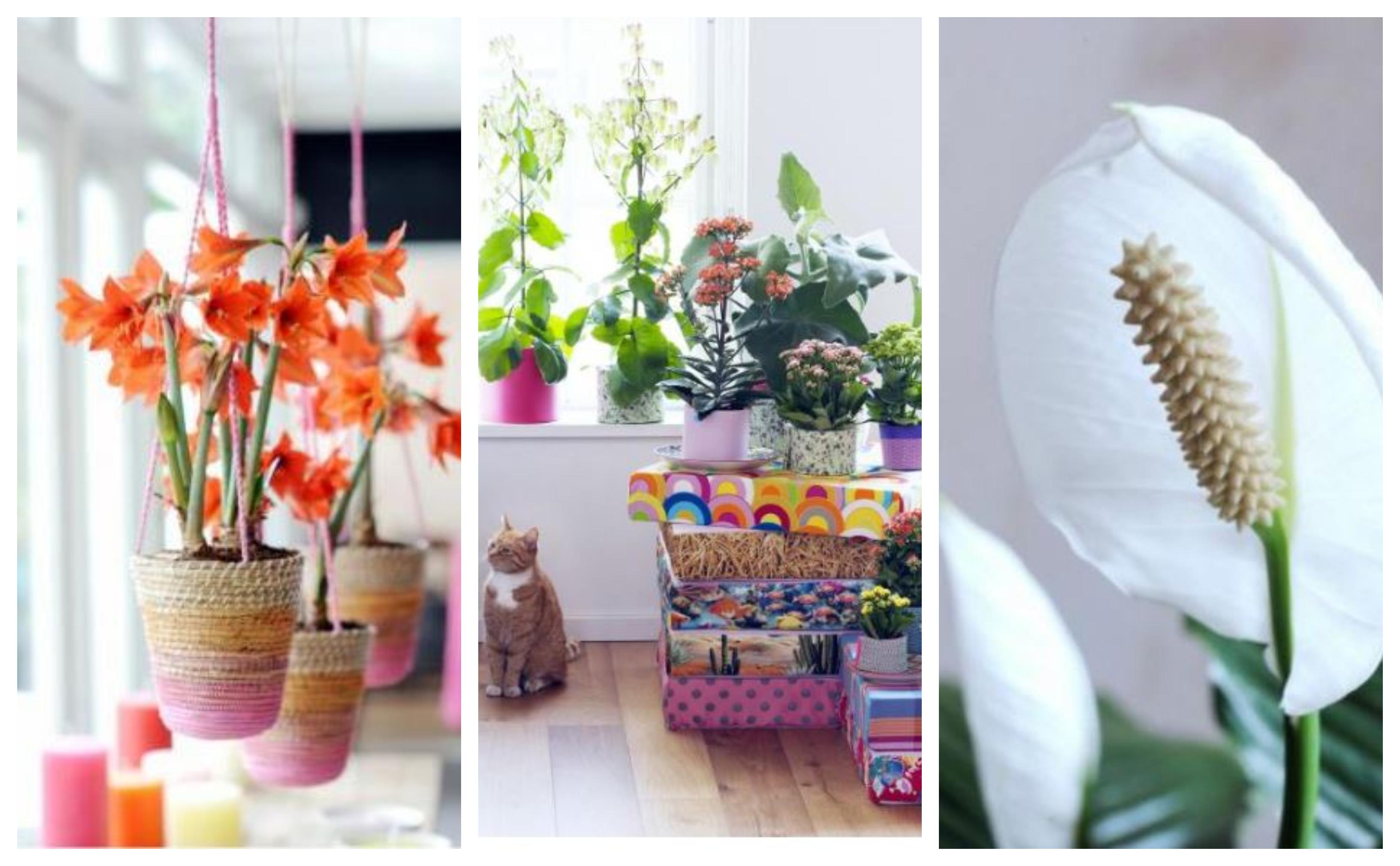 De mooiste kamerplanten voor de winter