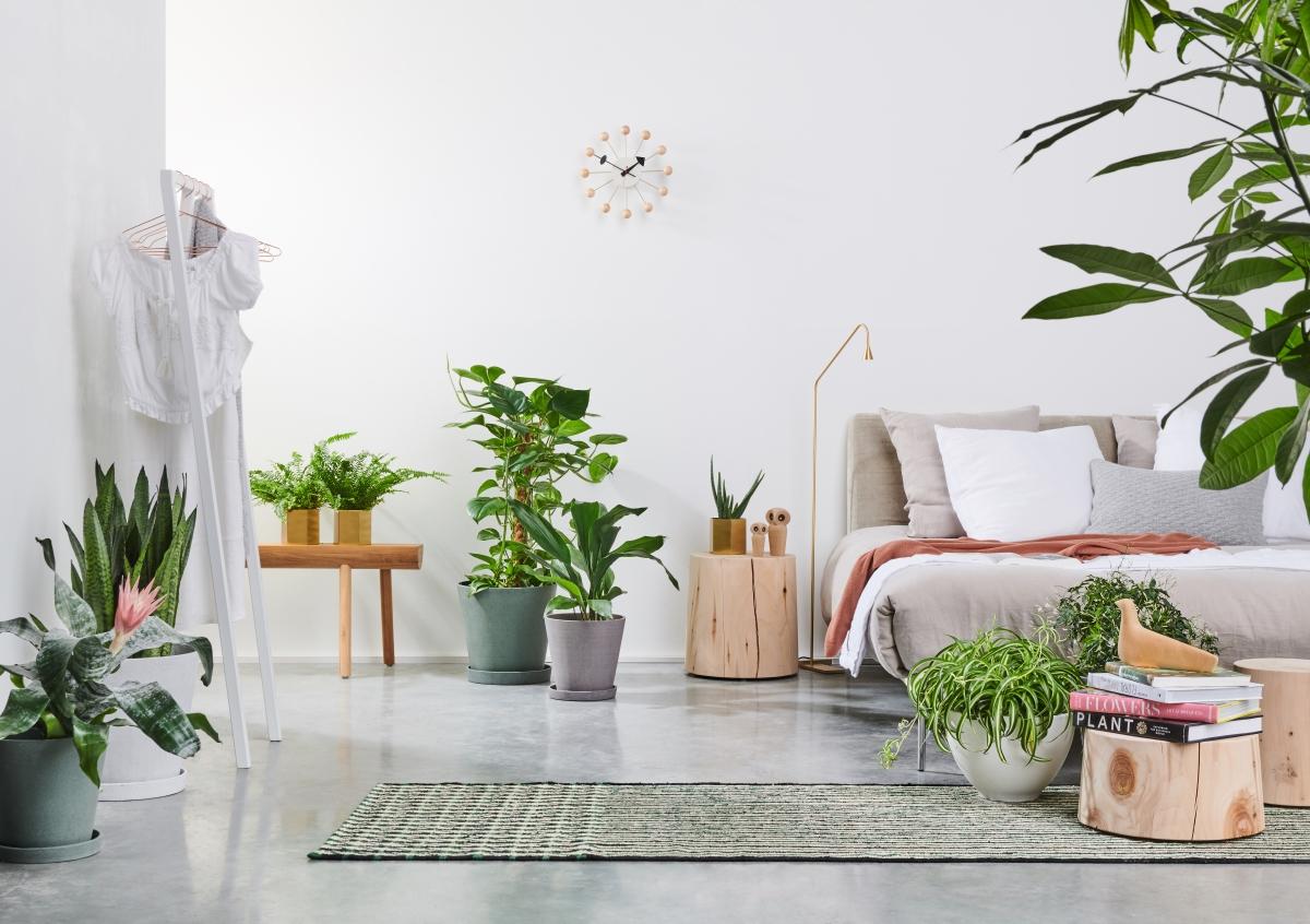 Slaap als een roos met kamerplanten in je slaapkamer