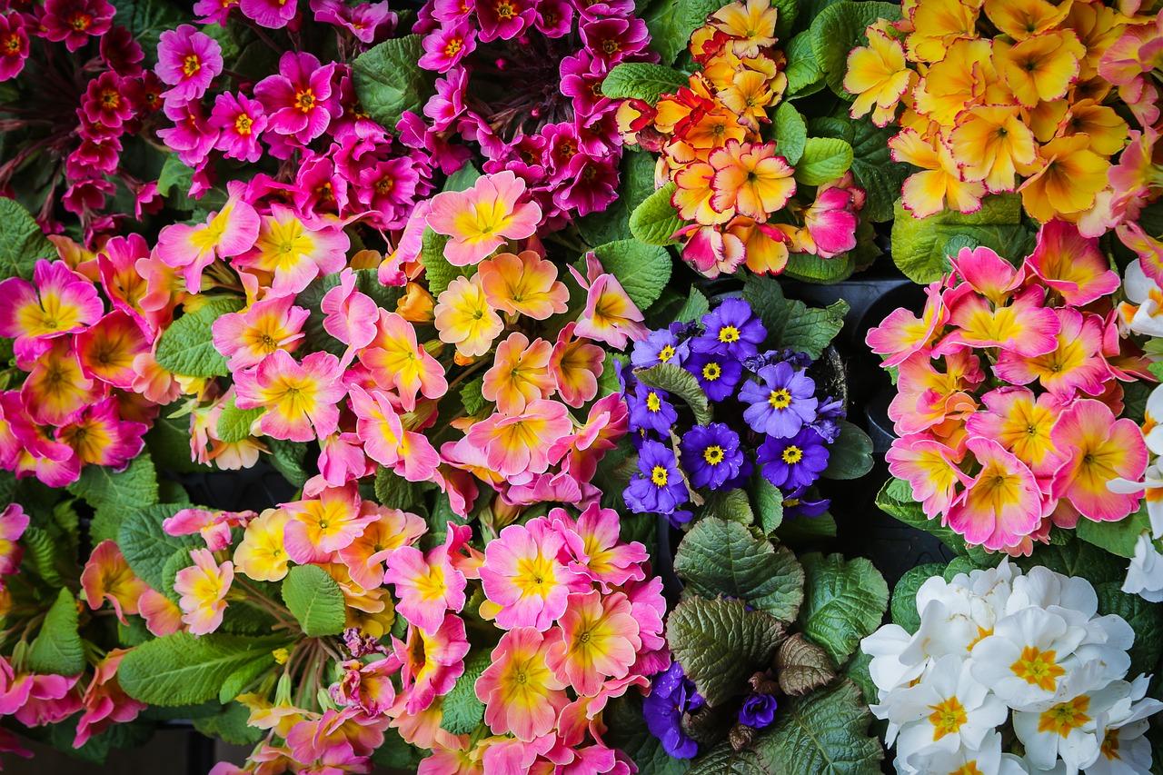 De mooiste kamerplanten voor de lente